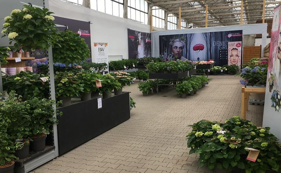 Ab-Hof-Verkauf Pellens Hortensien
